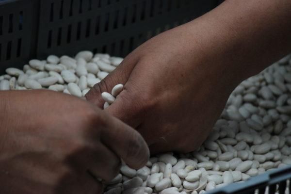 Día Internacional de las Semillas 2020: que circule la vida
