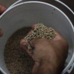 Bioleft en GOSSI, la red global de semillas abiertas